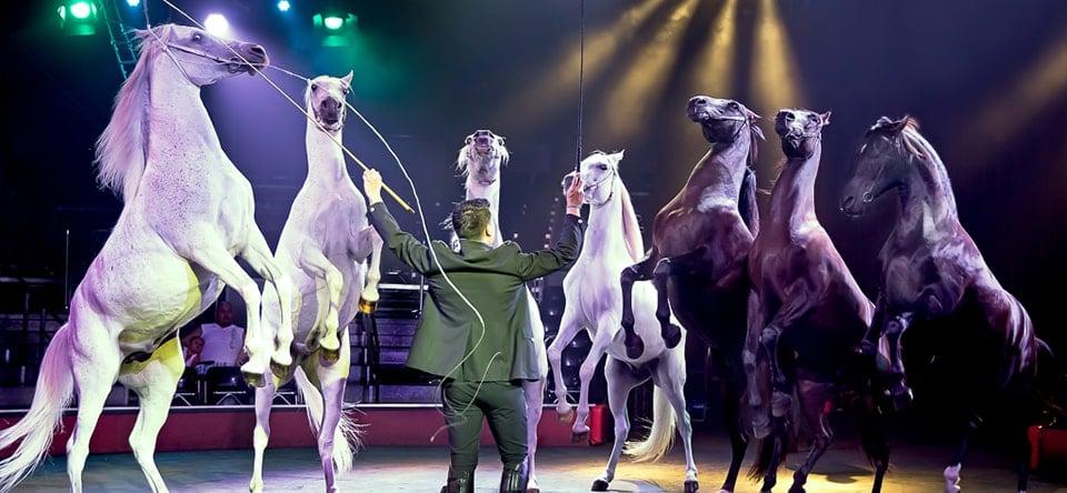 animaux cirque noel niort