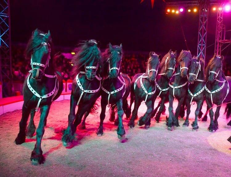 chevaux cirque de noel